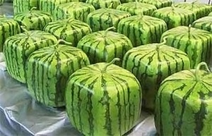 square-watermelons